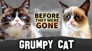 Grumpy Cat   Before They Were Gone   Tardar Sauce