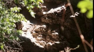 preview picture of video 'Tatabánya - ( Turul  Szelim barlang )'
