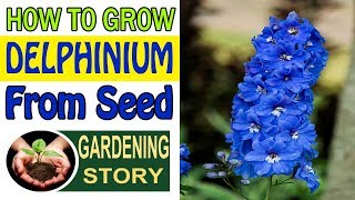How To Grow Delphinium From Seed | Gardening Story