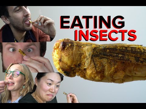 EATING INSECTS & Cricket Flour Bars Taste Test