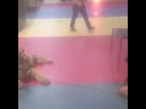 В Туле в контактном зоопарке издеваются над тигренком