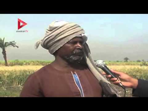 ارتفاع أسعار الأسمدة يرهق مزارعي القمح في الأقصر