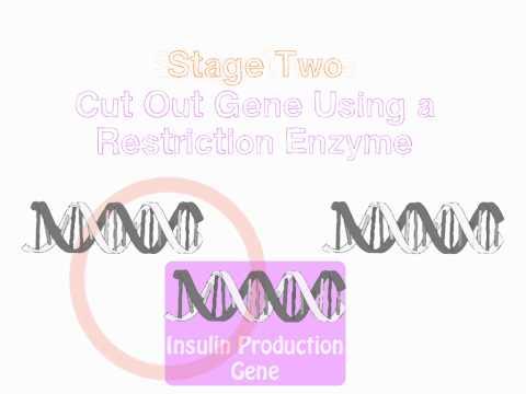Les graines de lin avec le diabète chez les enfants de type 1