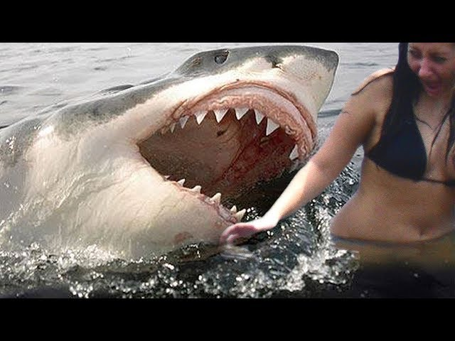 Top 10 DEADLIEST SHARK ATTACKS Heard Around The World