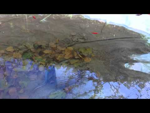 Russo che pesca in 3.7.5 basi di Mar Nero