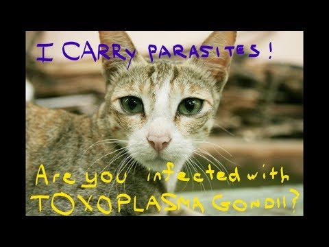 Linspection du sang sur les parasites