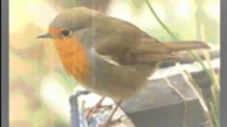 The Robins Song