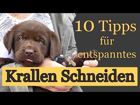 10 Tipps zum entspannten Krallenschneiden beim Hund