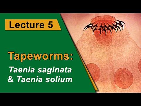 Az enterobiasis egészségesen él