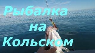 Морская рыбалка на кольском полуострове в августе