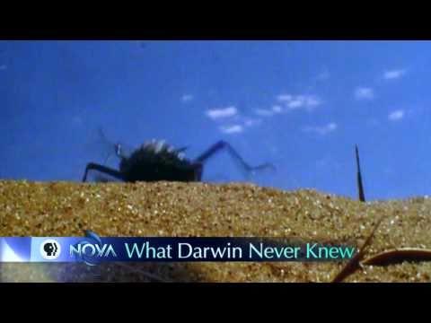 """what Darwin Never Knew"" On Pbs's Nova, Dec 29th  The Dispersal Of Darwin"