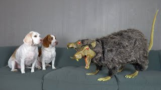 Dogs vs Two-Headed Rat Prank! Funny Dogs Maymo, Potpie & Penny Battle Sewer Rodent
