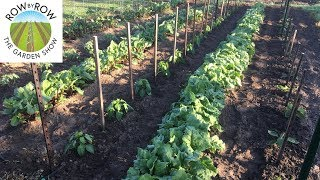 What is the Best Design for a Vegetable Garden?