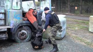 BRIX-Rottweiler dog