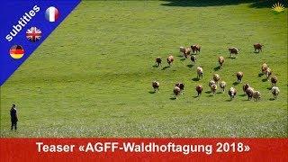 Teaser: AGFF-Waldhoftagung (Futterbau) 16. August 2018 in Langenthal/BE