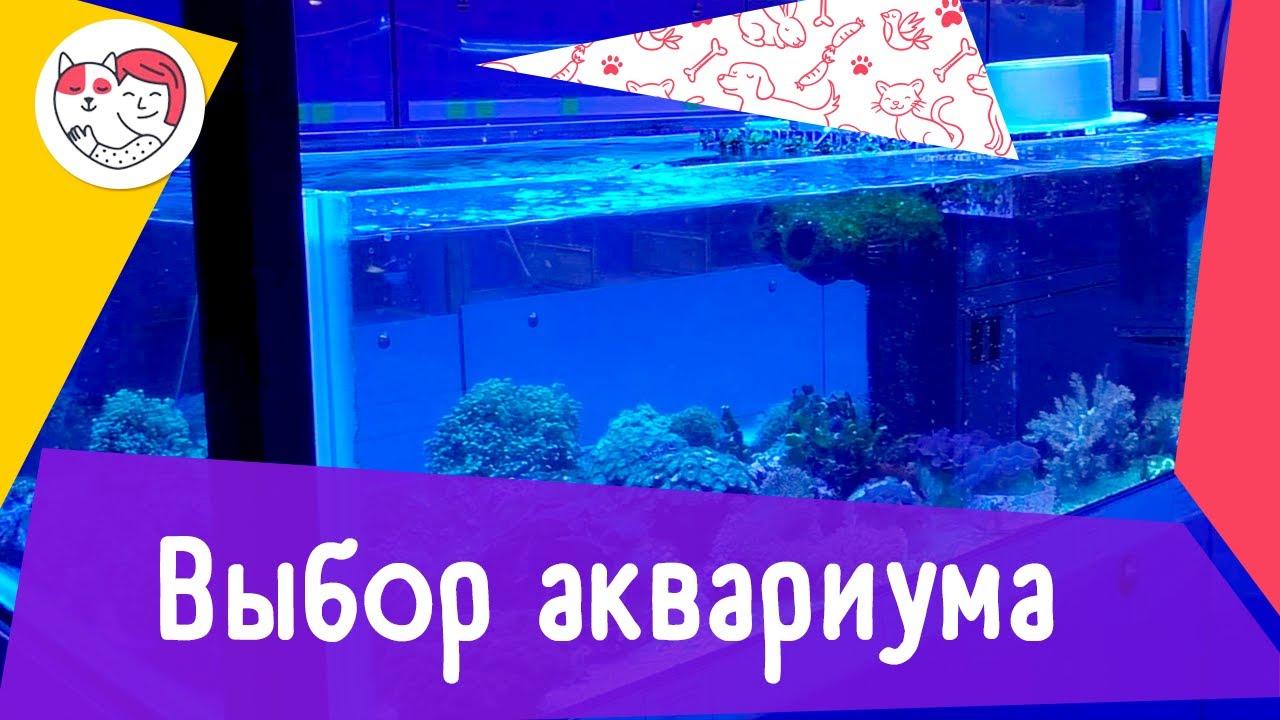 4 правила выбора аквариума
