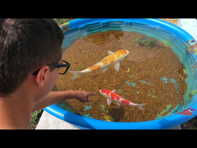 Mini POND EMERGENCY!! NEW COLORFUL FISH