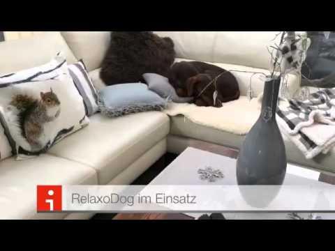 RelaxoPet Dog and Cat 2.0 (Hund, Katze)
