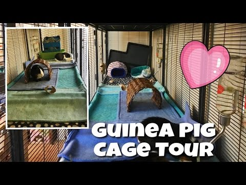 Guinea Pig Cage Tour (January 2017) || Triple-Wide Midwest Critter Nation