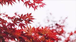 Vol.3【安静抒情】15首 钢琴曲 轻音乐 Relaxing Piano Music