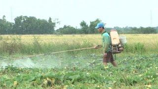 Đồng bào Khmer ở Kiên Giang được cải thiện từ Chương trình 135