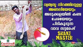 WOW! Rare Coloured Viper and Rat Snake rescued from the Kitchen  | Vava Suresh | Snakemaster