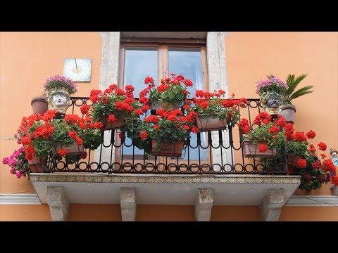 Когда заносить цветы с балкона в дом? При какой температуре стоит заносить растения в дом?