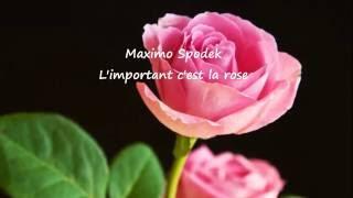 MAXIMO SPODEK, L'IMPORTANT C'EST LA ROSE