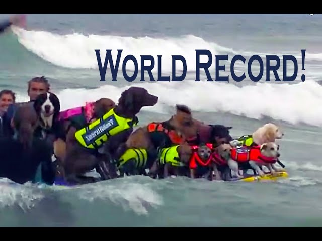 Rose Parade California Surf Surfing Dogs Lucy Pet Imperial Beach Championships