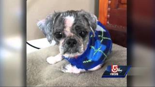 Ball of fur found in home was neglected dog