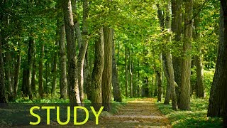 3 Hour Music to Study and Concentrate: Relaxing Music, Alpha Waves, Meditation Music, Relax ☯1667
