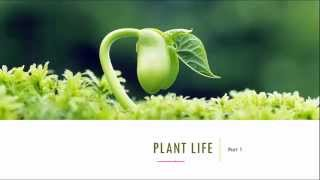 Plant Life - Part 1, 5th Standard, Science, CBSE - Download this Video in MP3, M4A, WEBM, MP4, 3GP