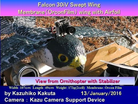 Falcon 30iV Swept wing with Stabilizer : View from Ornithopter by FatShark PilotHD V2 Camera