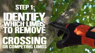How To Trim Trees