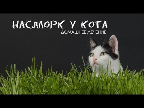 Лечение - насморк у кота!  Кошка и сопли лечение без затрат! Домашнее лечение