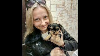 VLOG: Едем за щенком!! Щенок йоркширского терьера