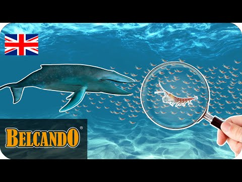 BELCANDO | dog food ingredients #1 Krill