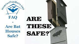 FAQ Are Bat Houses Safe to be Around?