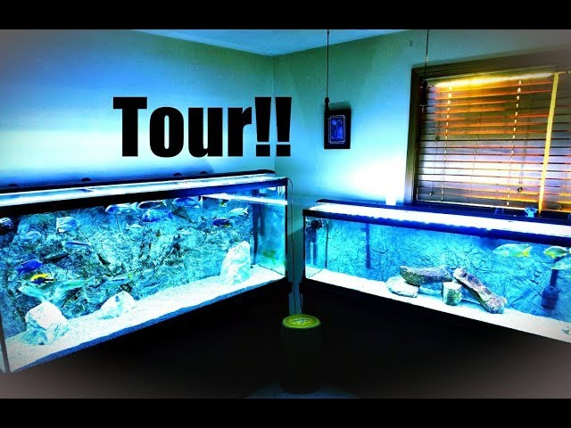 Take a Complete Tour of My Fishroom.  One Fish Was Just Eaten Unfortunately