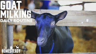 Daily Goat Milking Routine EVERY SINGLE STEP