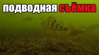 Клев рыбы в куменах 12 августа