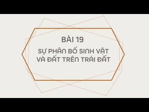 Bài 19 ( Sưu tầm)
