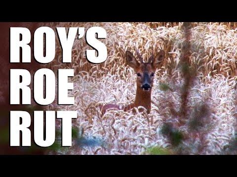 Roy's Roe Rut