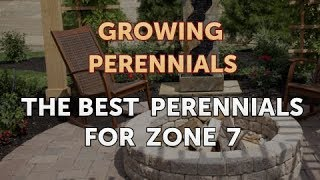 The Best Perennials for Zone 7