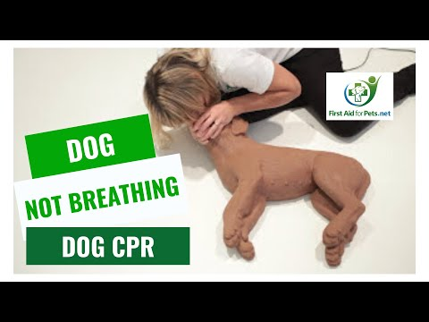 Learn To Perform CPR On Your Cat Or Dog