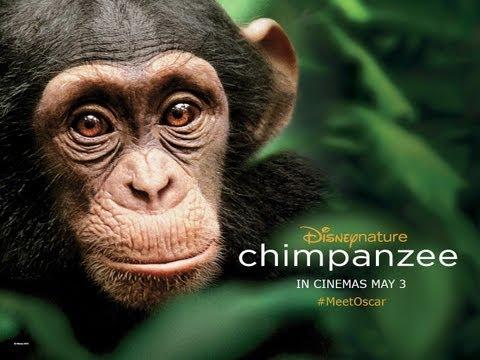 Movie Emporium » Oscar the chimpanzee