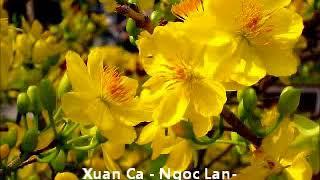 PHAMDUY Xuan Ca Ngoc Lan