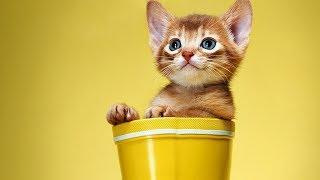 Смешные коты, кошки и другие животные (funny cats 2019) – ЗАПРЕЩЕНО СКУЧАТЬ, ОЧЕНЬ СМЕШНО