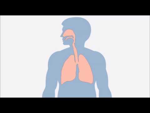 Quels symptômes aux helminthes chez ladulte