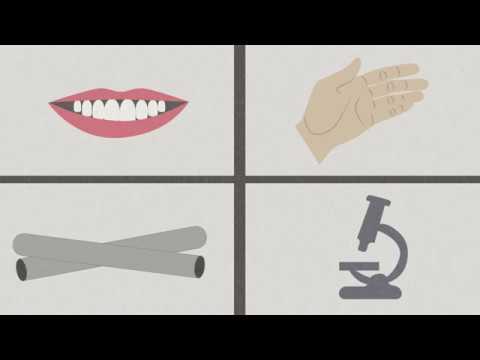 Plathelminthen und nematoden